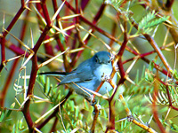 Photographs of Passerines (Gallery #1)