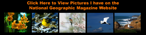 Link to Ron Storey's Pictures on National Geographics Magazine's Website